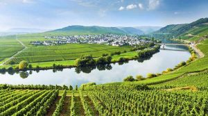 Moselle Valley Wines Bike Tour